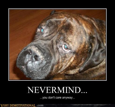 dogs nevermind nirvana sad but true you-dont-care - 4259247872
