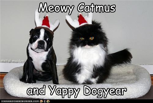 Meowy Catmus and Yappy Dogyear Cleverness Here Cleverness Here metal-maiden