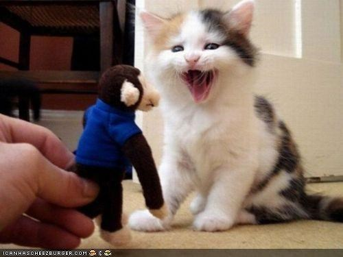 cyoot kitteh of teh day,excited,monkey,stuffed animals