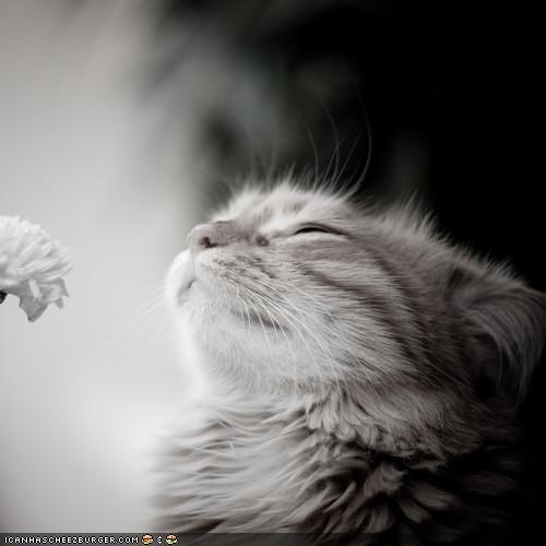 cyoot kitteh of teh day,eyes closed,Flower,power