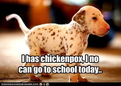 chicken pox,dalmatian,home sick,no,no school,puppy,school,spots