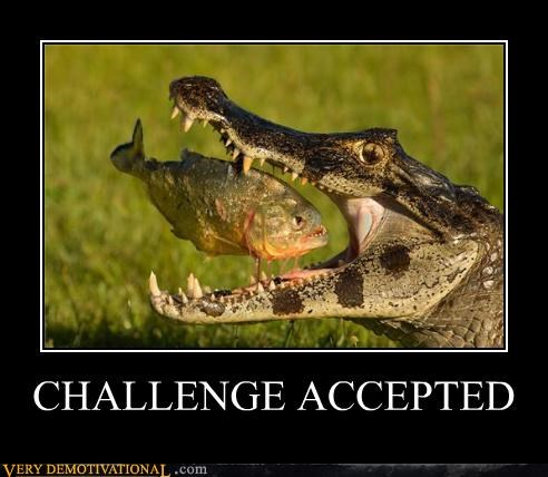 aligator animals Challenge Accepted nature piranha - 4261094144