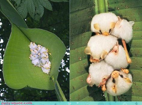 bat cuddle cute leaf - 4261137408