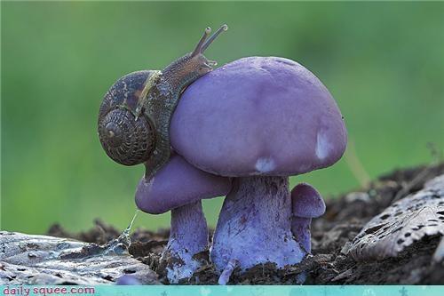 cute mushroom slimey slimy snail - 4261179392