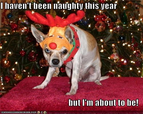 bad,christmas,costume,mixed breed,naughty,reindeer,whatbreed
