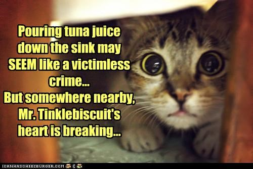 Pouring tuna juice down the sink may SEEM like a victimless crime... But somewhere nearby, Mr. Tinklebiscuit's heart is breaking...