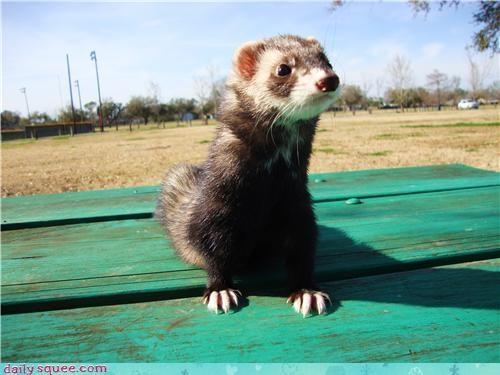 cute ferret nerd jokes Pokémon shiny - 4262216448