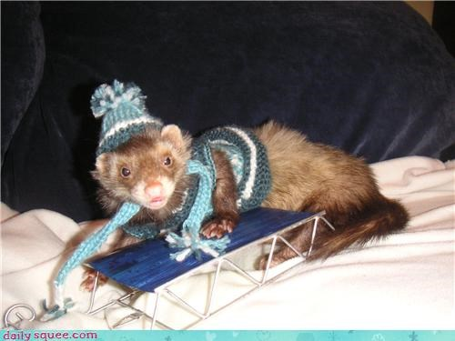 cold,costume,ferret,hat,snow,winter