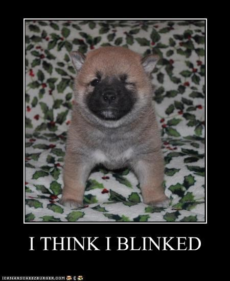 blinking FAIL i think loss oops puppy staring contest thinking whatbreed - 4262395136
