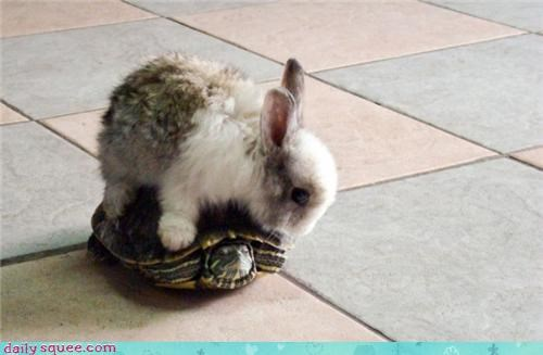 bunny Hall of Fame happy bunday piggy-back ride turtle - 4262413568