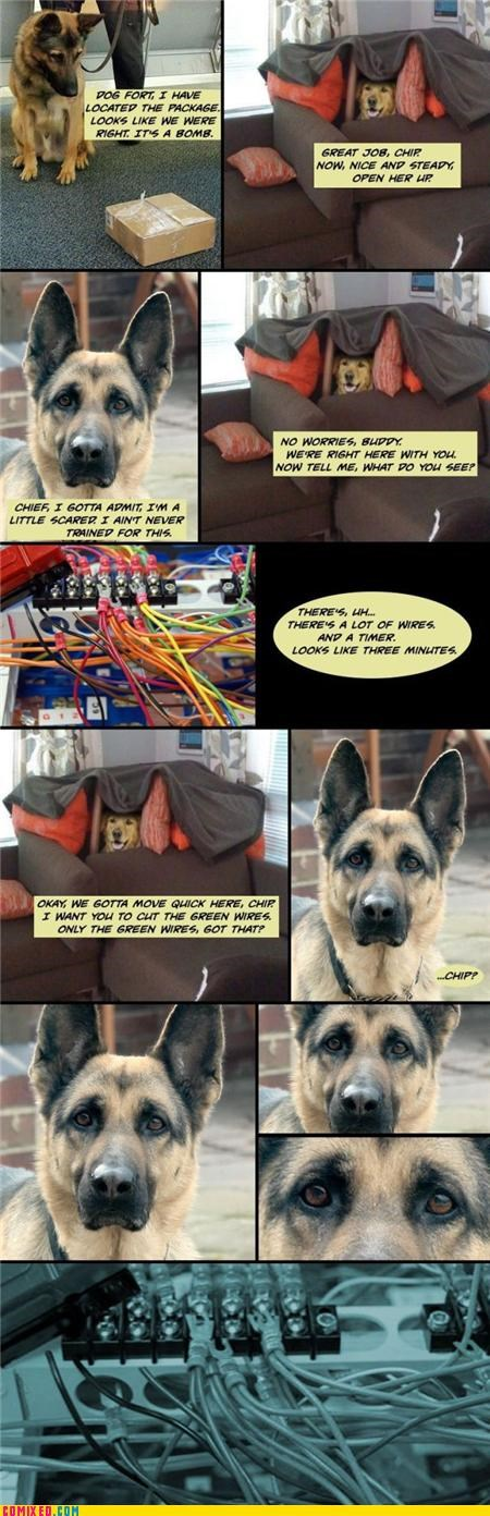 animals awesome corgi cute Dog Fort doggies Memes - 4262451968