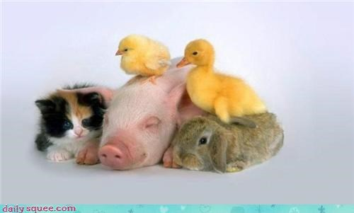 cuddle puddle,kitten,ducklings,piglet,bunny,squee