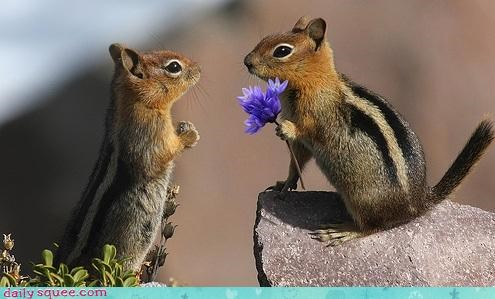 chipmunks Flower tail love gift romance squee categoryimage