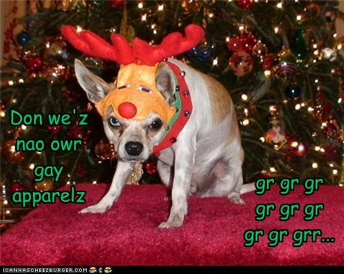 Cheezburger Image 4263624192