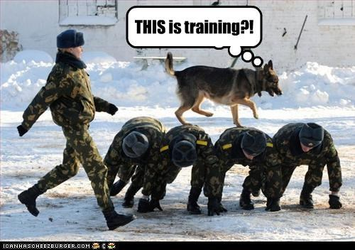 backs,german shepherd,human,humans,military,surprised,training,walking