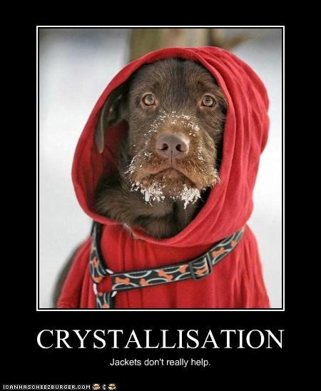 cold crystallization do not want doesnt-help ice jacket labrador snow unhappy - 4264029696