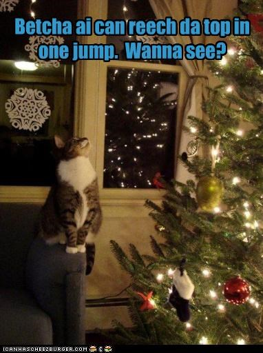 ambition bet caption captioned cat catmas christmas christmas tree demonstration jump jumping trick wanna see