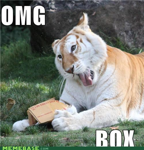 australia box critters dreamland tiger