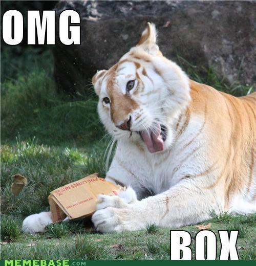 australia box critters dreamland tiger - 4264292352