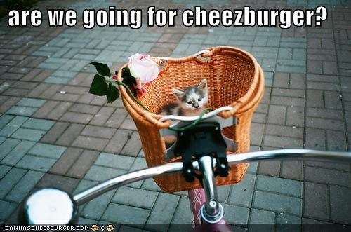 Cheezburger Image 4264494080