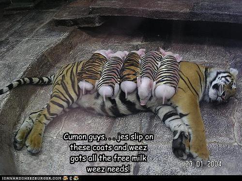 Cheezburger Image 4264776192