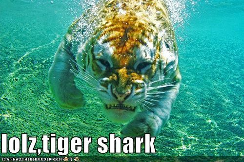 critters fish scary shark swimming tiger - 4264798976