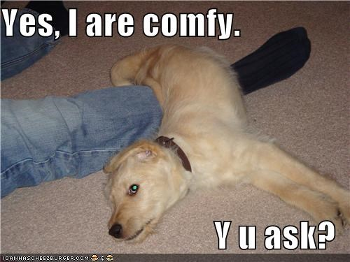 answer,comfy,confused,laying,leg,mixed breed,question,sheepdog,validation,yes