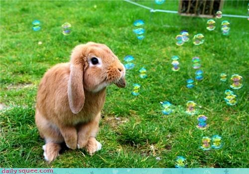 bubbles,bunny,grass,happy bunday,lopunny,rabbit