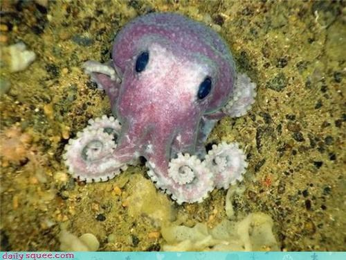 blushing ocean octopus pink sea creature shy widdle - 4265928448