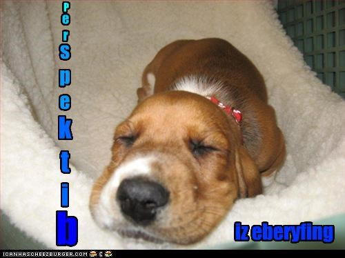 angle beagle closed cute everything eyes napping perspective sleeping - 4265958144