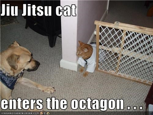 Battle,cat,cats-vs-dogs,fighting,gi,jujitsu,octagon,pit bull,sparring,war