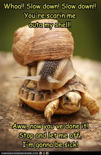 afraid,caption,captioned,relativity,slow down,snail,speed,turtle
