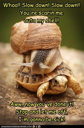 afraid caption captioned relativity slow down snail speed turtle - 4266234880