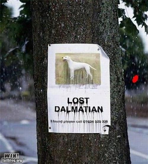 clever,dogs,lost,photoshop