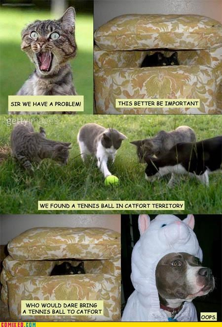 Catfort,Cats,Caturday,Dog Fort,dogfort,lol,meme