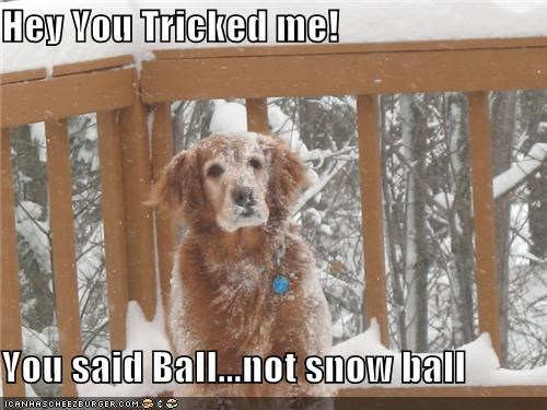 ball betrayed difference exclamation golden retriever Hey snow snow ball tricked