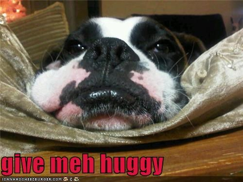 Cheezburger Image 4266588160