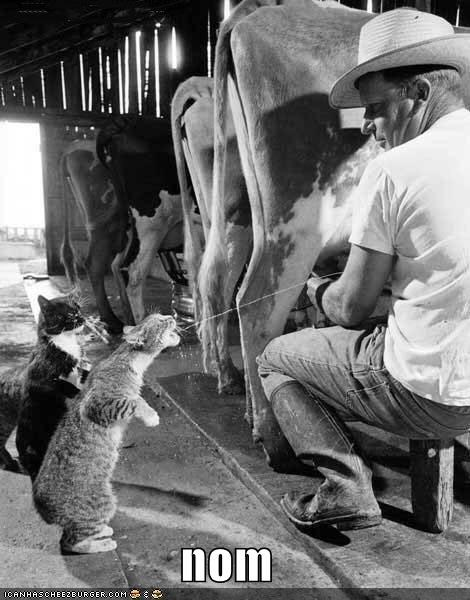 caption captioned cat cow do want Hall of Fame milk milking nom source - 4266873344
