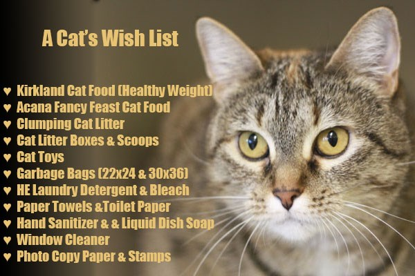 christmas pets list wish animals - 4267013