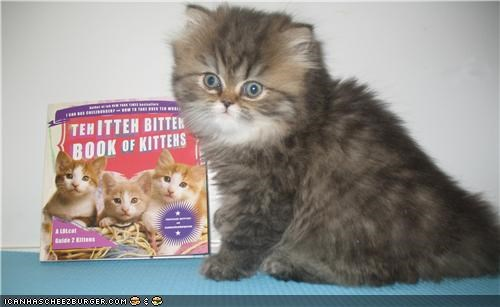 contest,itteh bitteh book of kittehs,winner