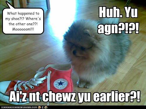 Huh. Yu agn?!?! Ai'z nt chewz yu earlier?! What happened to my shoe?!? Where's the other one??! Moooooom!!!!