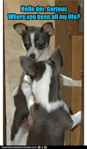 chihuahua,compliment,courting,gorgeous,hello,mirror,mixed breed,pickup line,question,Staring