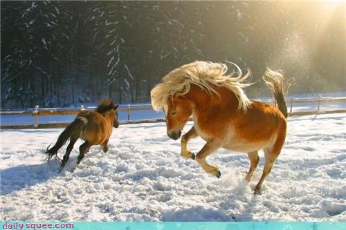 fabulous,hair flip,hooves,horse,horse play,mane