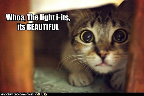 Whoa, The light i-its, its BEAUTIFUL