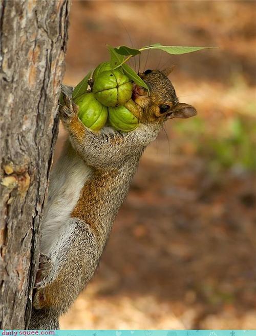 cute face nom nuts squirrel - 4268911872
