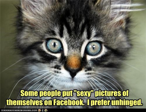 caption,captioned,cat,crazy eyes,eyes,facebook,kitten,pictures,preference,preferences,sexy,Staring,unhinged