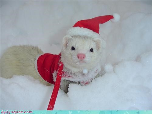 christmas,cute,ferret,hat