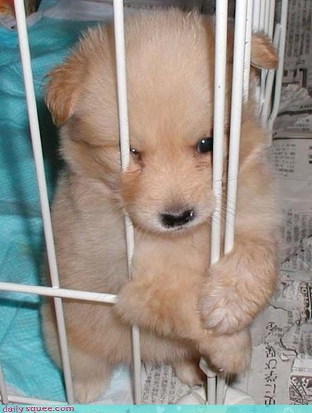 cute face puppy puppy dog eyes Sad - 4269070080