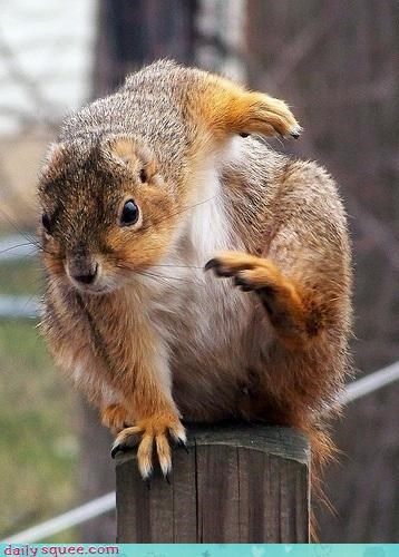 action cute face squirrel - 4269515008