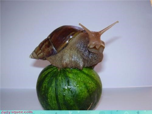 baby big cute giant gourd slug snail - 4269542400